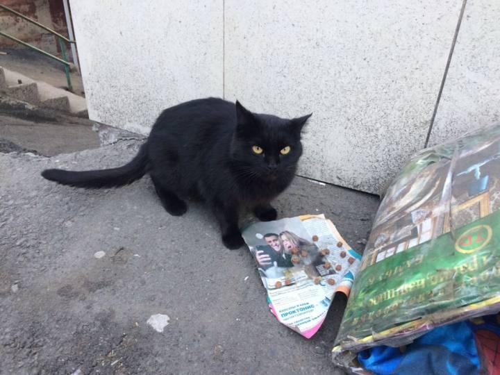 На Кирова во Владивостоке неизвестные жестоко убивают бездомных кошек