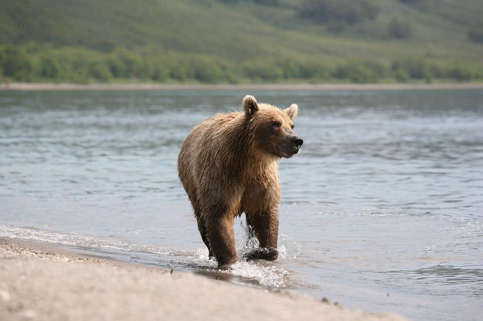 В Приморье медведь плескался в море на радость отдыхающим