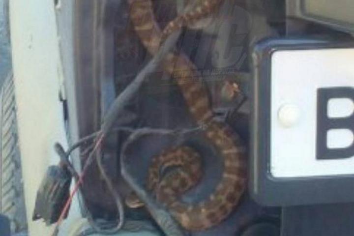 Змея забралась в машину отдыхающих на острове Русском