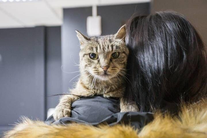 Памятник кошке Матроске откроют во Владивостоке сегодня