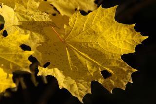 В первый день осени в Приморье будет тепло и солнечно