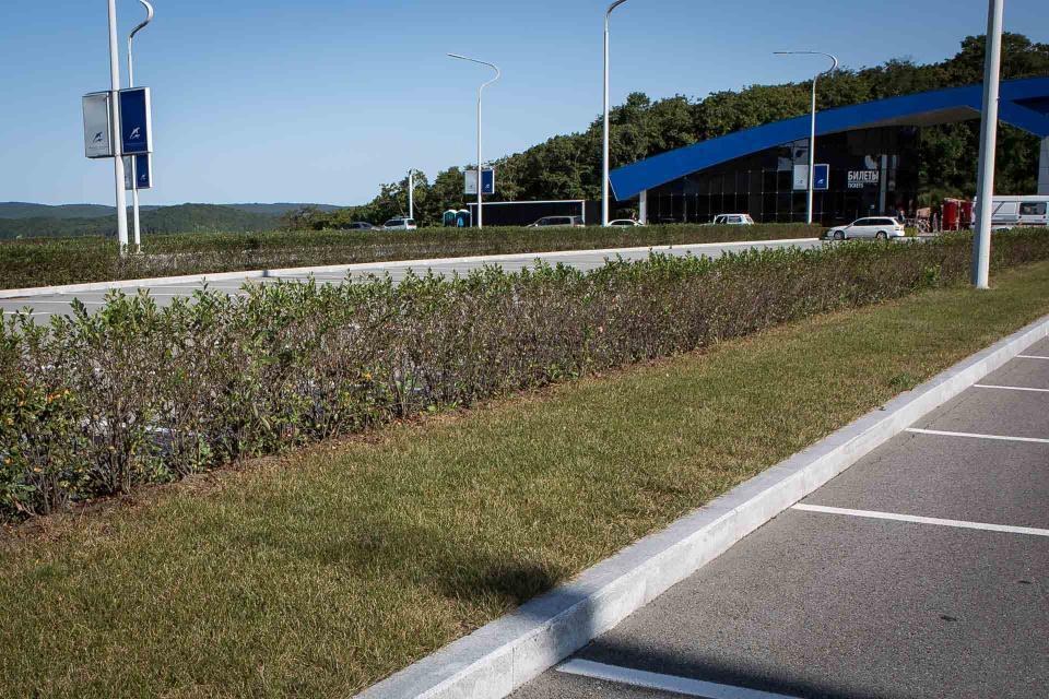 Приморский океанариум: водители экскурсионных автобусов выжигают наши растения