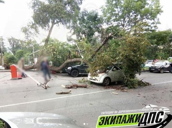 Во Владивостоке на движущийся автомобиль упало дерево