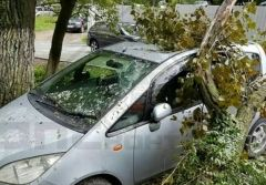 Дерево рухнуло на автомобиль в районе ТЦ «Европейский» во Владивостоке