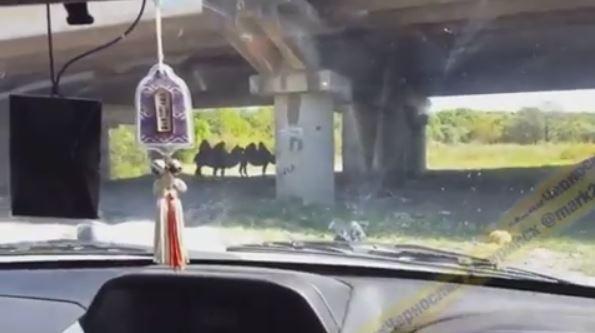 Необычных животных встретил под мостом житель Приморья
