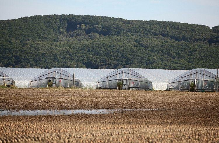 «Утонуло все»: с таким летом приморские фермеры еще не сталкивались