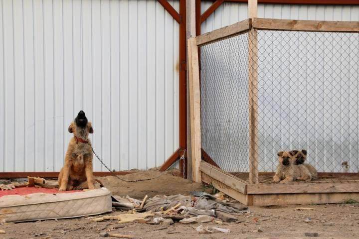 Съесть собаку во Владивостоке: особенности корейского деликатеса