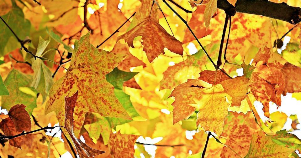 Пять фактов о сентябрьской погоде в Приморье