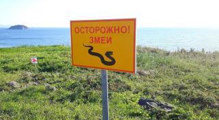 Змеи обосновались на территории Приморского океанариума