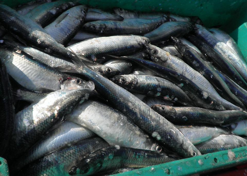 Во Владивостоке сожгли 160 кг испорченной рыбы