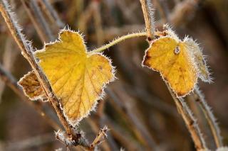 Синоптики сообщили, когда по Приморью ударят первые заморозки