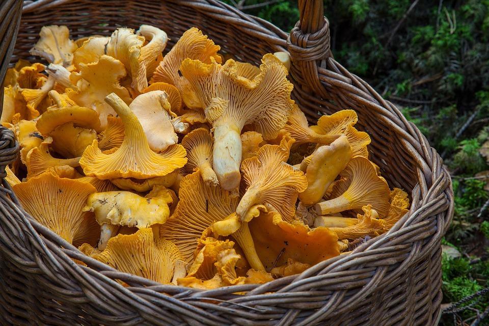 В течение лета 19 приморцев отравились грибами