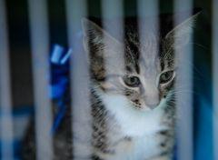 Во Владивостоке пожарные спасли котенка