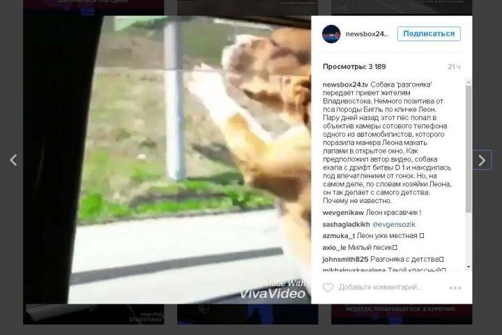 Собака-«разгоняка» из Владивостока стала звездой Instagram