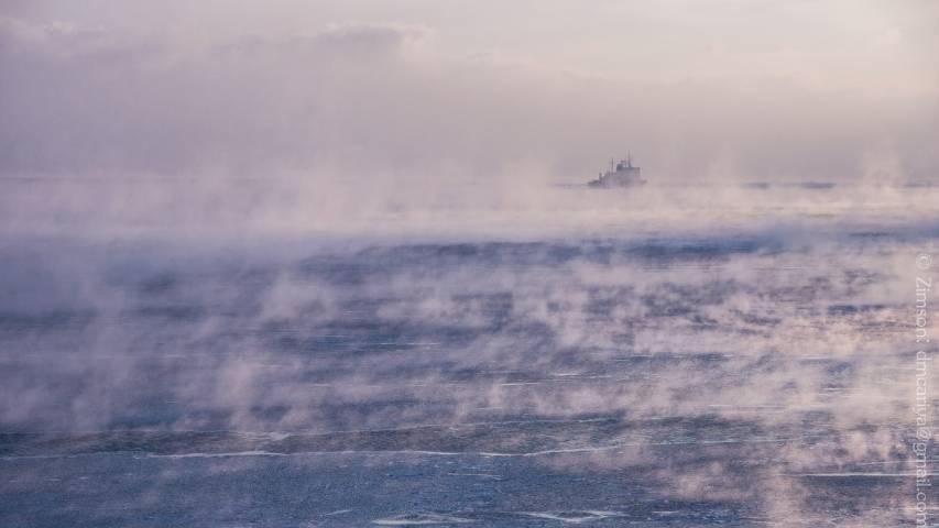 Огромная стая морских животных удивила рыбаков под Владивостоком