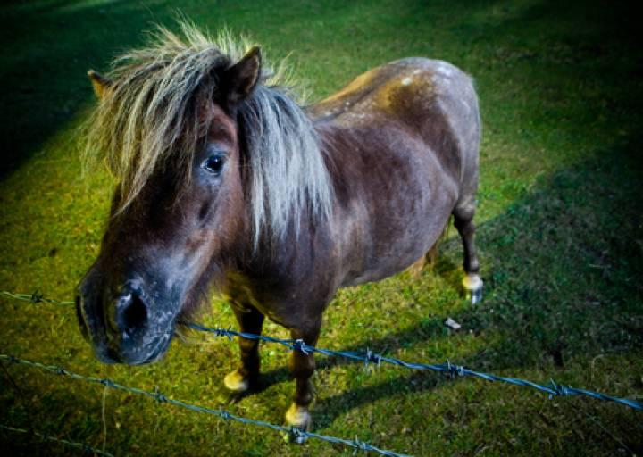 В Большом Камне лошадь напала на ребенка