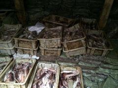 Китайские рыбаки незаконно выловили в приморских водах около 60 тонн биоресурсов