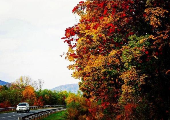 Краски осени: золотая пора продолжает радовать жителей Приморья