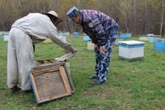 Приморские заключенные собрали полтонны меда