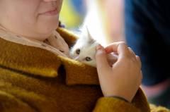 Во Владивостоке приютили бездомных котят