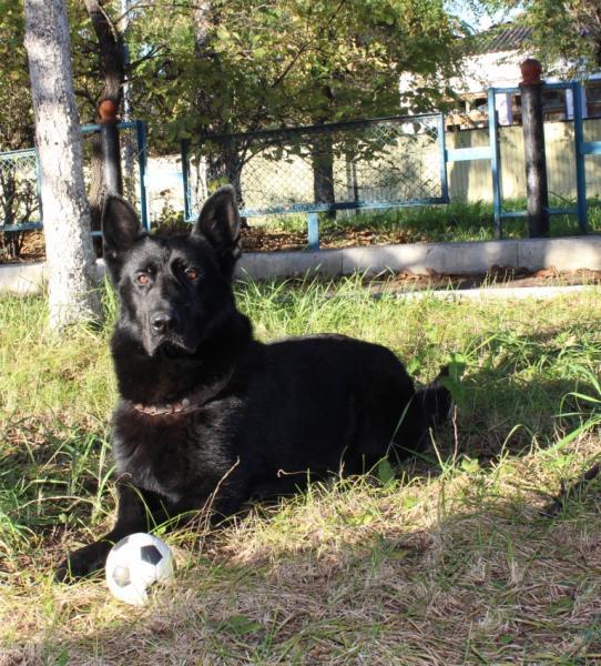 Собака по горячим следам выследила грабителей в Приморье