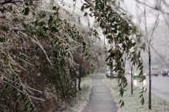 Во Владивостоке выпал первый снег