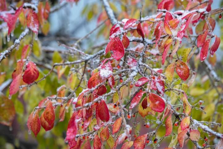 Приморцы попрощались с теплой осенью