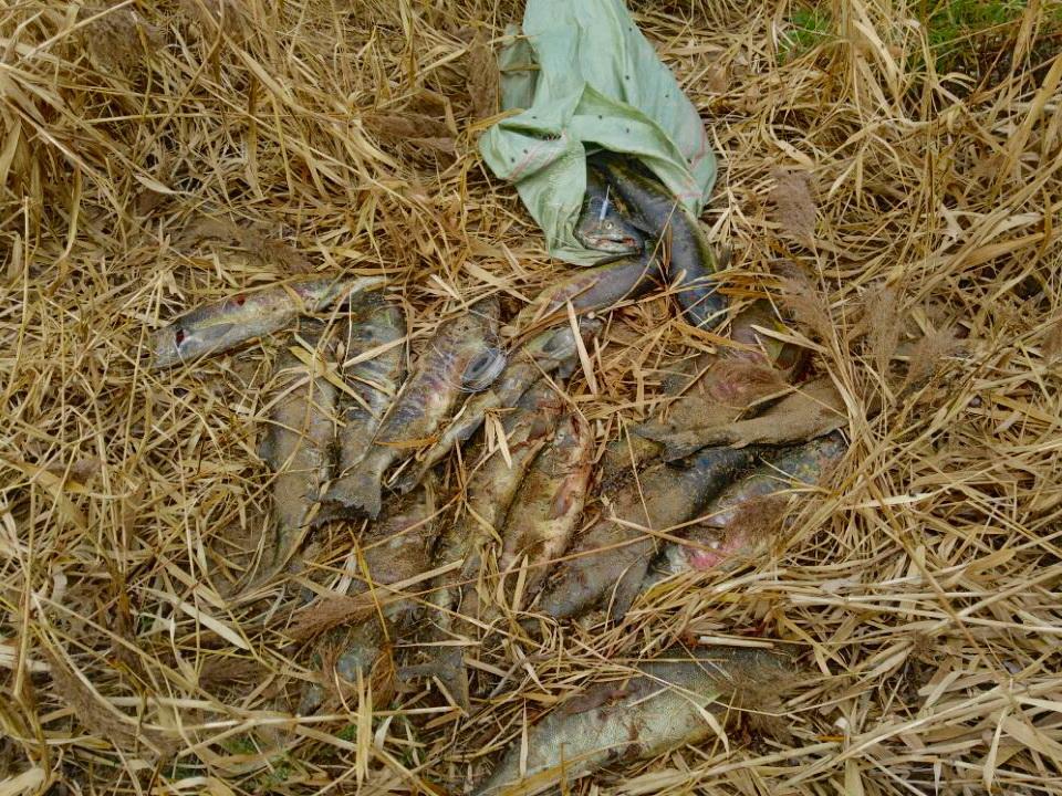 Четверо приморцев попались на незаконной рыбалке на территории «Земли леопарда»