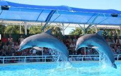 СМИ: в Приморском океанариуме погибли два дельфина