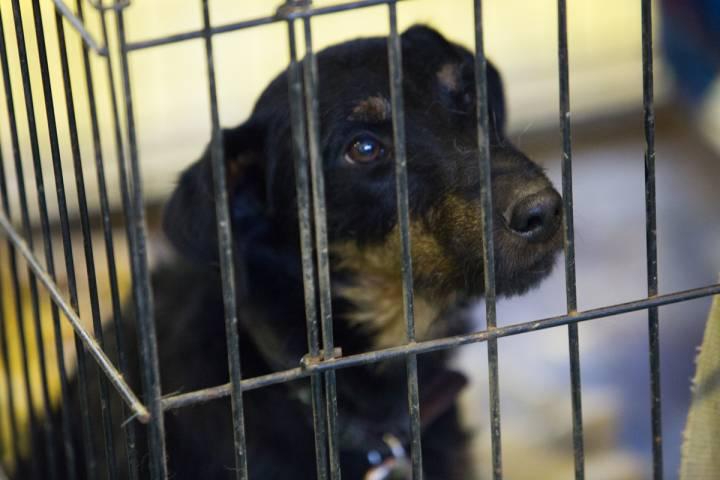 Во Владивостоке состоится пикет против жестокого обращения с животными