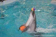 Тренер дельфинов: «Знаете, что чувствует тренер, получающий рыбу, у которой из головы воняет гнилью?»