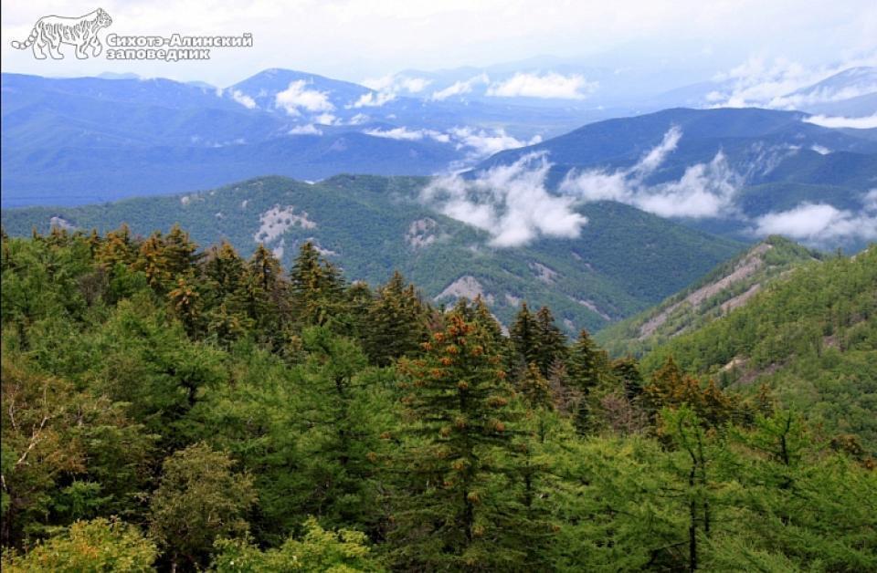 Глава Минприроды требует ввести в Приморье запрет на посещение лесов