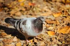 Жители Приморья «перестреливались» голубями