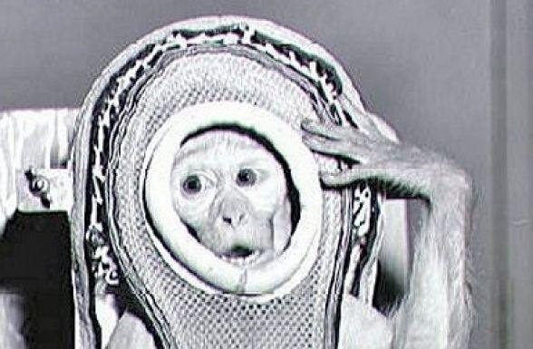 Контактные обезьяны посетили Приморье
