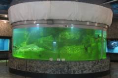 «Аквамир» без науки: океанариум Владивостока на грани закрытия