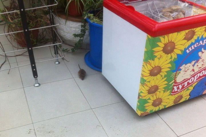 Крыса была замечена в торговом центре Владивостока