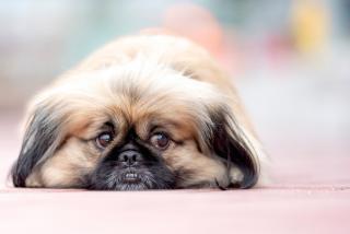 Во Владивостоке аферист обманул владелицу потерявшейся собаки