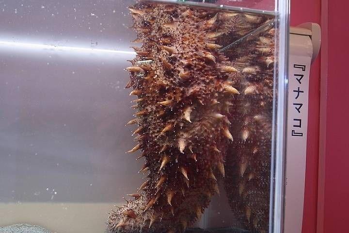 Лекарство от рака обнаружили в морском огурце ученые ДВФУ