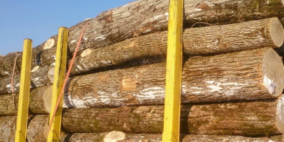 Черный лесоруб лишится свободы за четыре кубометра леса
