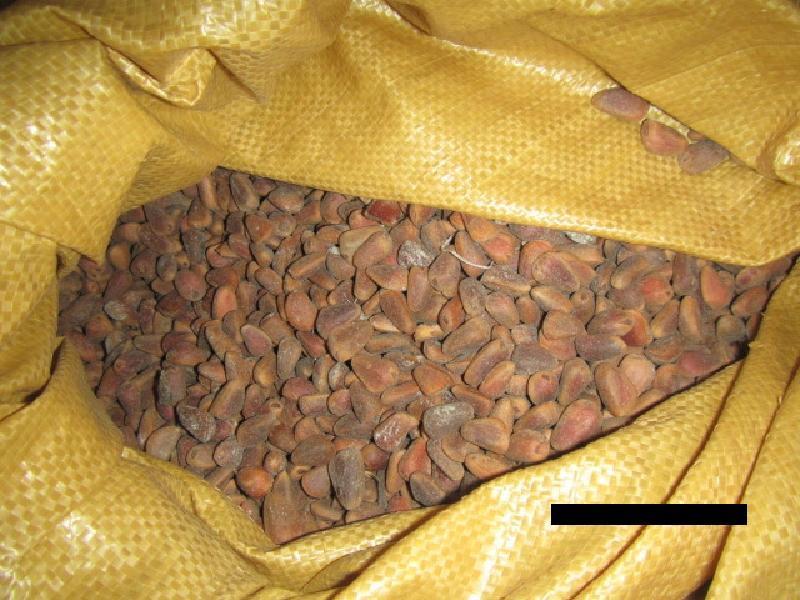 Десятки тонн контрабандного кедрового ореха не получат китайцы из Приморья