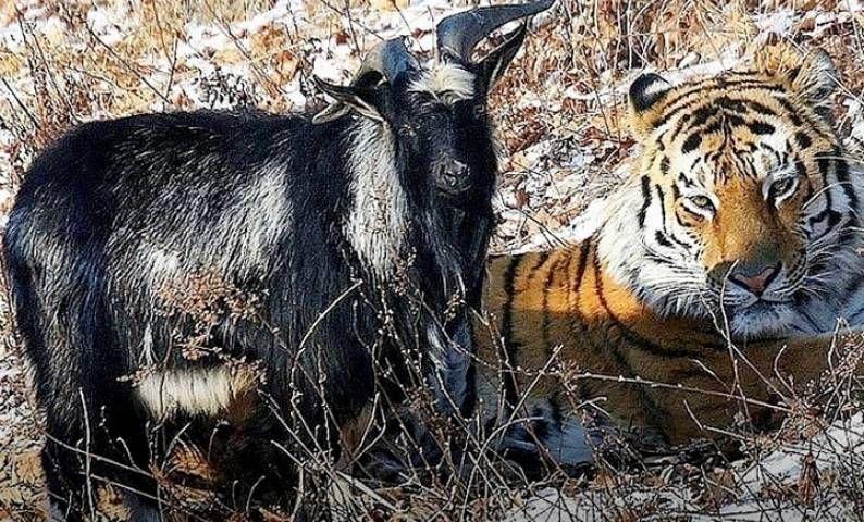 Тимур и Амур поселятся на центральной площади Владивостока к Новому году