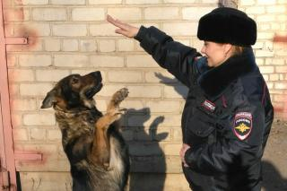 Служебная собака задержала приморца, похитившего мясную продукцию
