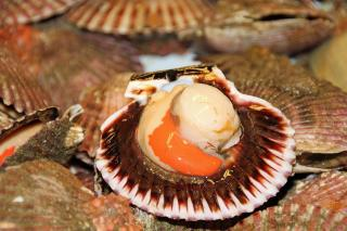 Сомнительные морские деликатесы не пустили на стол жителей Владивостока