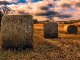 Приморское сено может закупаться аграриями Японии