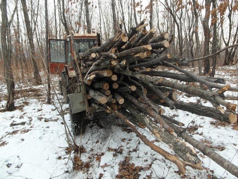Лесорубы в Приморье нарубили на 11,5 млн рублей