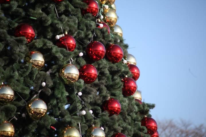 Во Владивостоке начались продажи елок