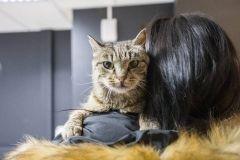 Рыжий кот поел прямо с прилавка в популярном супермаркете Владивостока