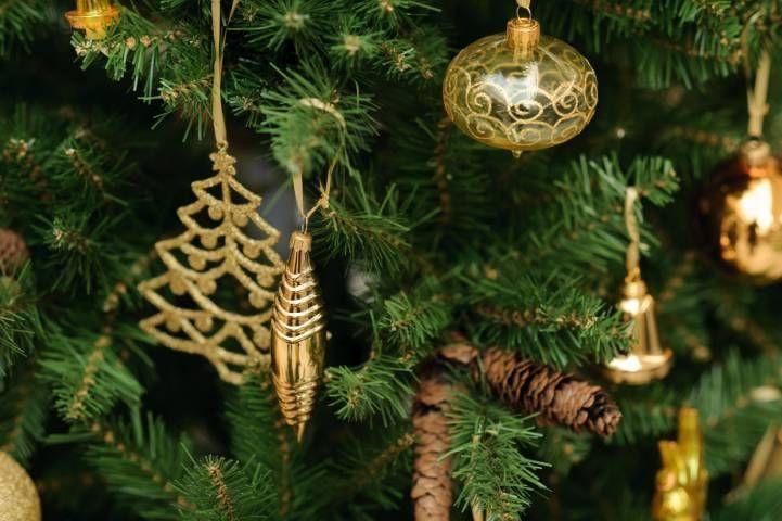 10 фактов о елках в Приморье