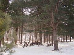 Спасатели нашли тело заблудившегося лесника рядом со Шкотово
