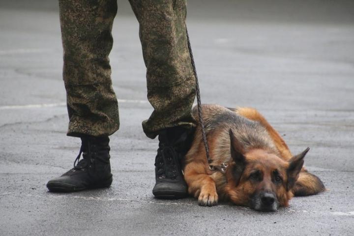 Пять зданий эвакуировали во Владивостоке после сообщения о минировании